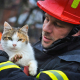 Mačka i vatrogasac (Marin Bubanj)